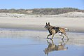 1st MSOB Canine Handler Surf Passage and Zodiac insert training 160209-M-AX605-220.jpg