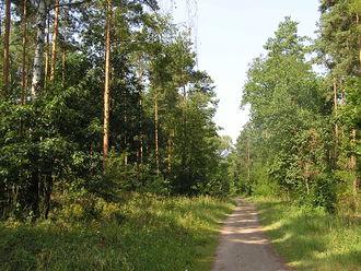 Grunewald (forest) - Image: 2006 07 24 Grunewald Neuer Schildhornweg