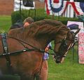 2009 Shelbyville Horse Show (3868245790).jpg