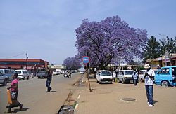 Center of Nhlangano with flowering Jacaranda tree