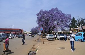Nhlangano - Center of Nhlangano with flowering Jacaranda tree
