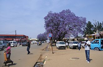 Nhlangano - Center of Nhlangano with flowering Jacaranda tree