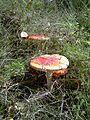 201209131505 IMAG0065.jpg