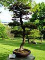 2012 kveten botanicka zahrada 071.JPG