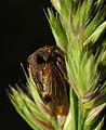 2013-06-02 21-21-16-membracidae.JPG