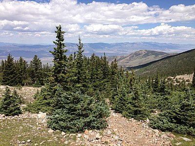 2013-07-14 11 15 14 Engelmann Spruce at tree line on the Wheeler Peak Summit Trail in Great Basin National Park, Nevada.jpg