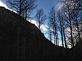2014-11-11 15 47 07 Bare Aspens along the Changing Canyon Trail in Lamoille Canyon, Nevada.JPG