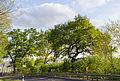 2015-05-05 - Büdingen Naturdenkmal 4 Eichen - 0845.jpg