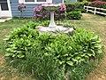 2015-05-18 12 56 03 Hostas along Terrace Boulevard in Ewing, New Jersey.jpg