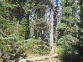 2017-08-15 Six Lakes Trail 03.jpg