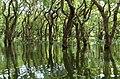 20171129 Mangrove forest Tonle Sap 6024 DxO.jpg