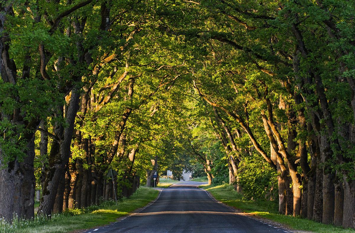 Suurem 245 Isa Park Wikipedia