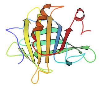 Beta-lactoglobulin