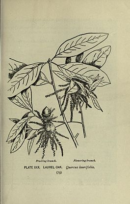 A guide to the trees (Page 79) (8435922210).jpg
