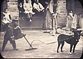 A monkey show, Changde, Hunan, China, ca.1900-1919 (IMP-YDS-RG008-358-0008-0059).jpg