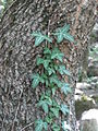 Ab plant 1032.jpg