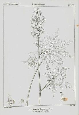 Ботаническая иллюстрация из книги Benjamin Delessert, 1820 г.