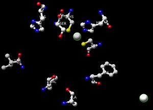 Alcohol dehydrogenase - The active site of alcohol dehydrogenase