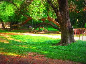 Adventure park - Asramam Adventure Park, Kollam, Kerala