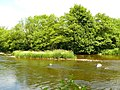 Afon Gwy - River Wye - geograph.org.uk - 1375993.jpg