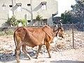 Ahmedabad2007-084.JPG