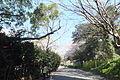 Akashi Park No,13.JPG