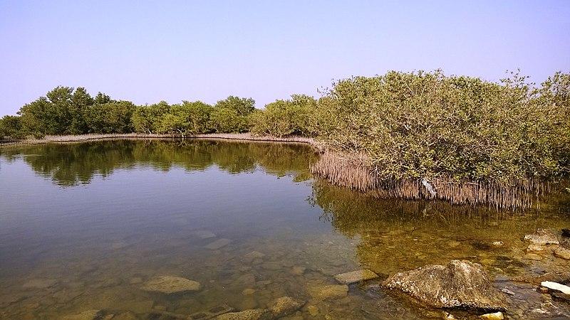 File:Al khore Mangrove forest (Purpule Island) - panoramio (20).jpg