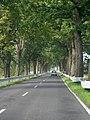 Allee bei Hirschburg - geo.hlipp.de - 20875.jpg