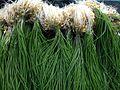 Allium monanthum 4.jpg