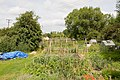 Allotments in Spring Gardens, Alresford - geograph.org.uk - 866213.jpg