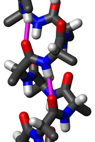 Strukturen på en α-helix. Blått - kväve, vitt - väte, rött - syre, svart - kol. Rosa - vätebindning.