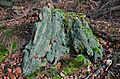 Although no mushrooms, it is really nice this treetrunk with moss at Oosterbeek - panoramio.jpg