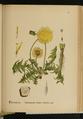 American Medicinal Plants 0521.png