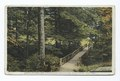 Among the Beeches, Chautauqua Institution, Chautauqua, New York (NYPL b12647398-79478).tiff