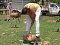 Angaston show 2007 Woodchopping.JPG
