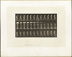 Animal locomotion. Plate 85 (Boston Public Library).jpg