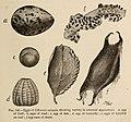 Animal studies (1903) (17578561003).jpg