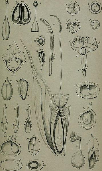 Annals And Magazine Of Natural History Abbreviation