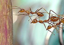 Ant active exploration using antenna.jpg
