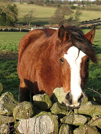 English: Any chance of a carrot? Friendly hors...