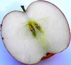 Apple red delicius cross-cut.jpg