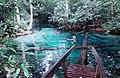 Aquario encantado em Nobres Mato Grosso.jpg