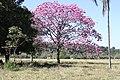 Araguainha - State of Mato Grosso, Brazil - panoramio (1100).jpg