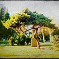Arbolito .en Plaza Marqués De Sobremonte..jpg