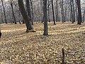 Arboretum - panoramio.jpg