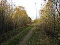 Arechava, Viciebsk, Belarus - panoramio (1).jpg