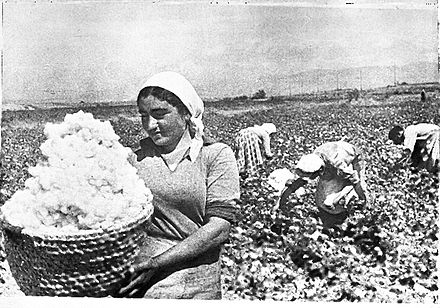 Picking cotton in Armenia in the 1930s. No cotton is grown there today. - Cotton
