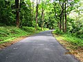 Athirapally Forest (Vazhachal Division) - panoramio (1).jpg