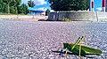 Auf Augenhöhe mit einem Grashüpfer im Fördepark Flensburg Parkplatz Areal - panoramio.jpg