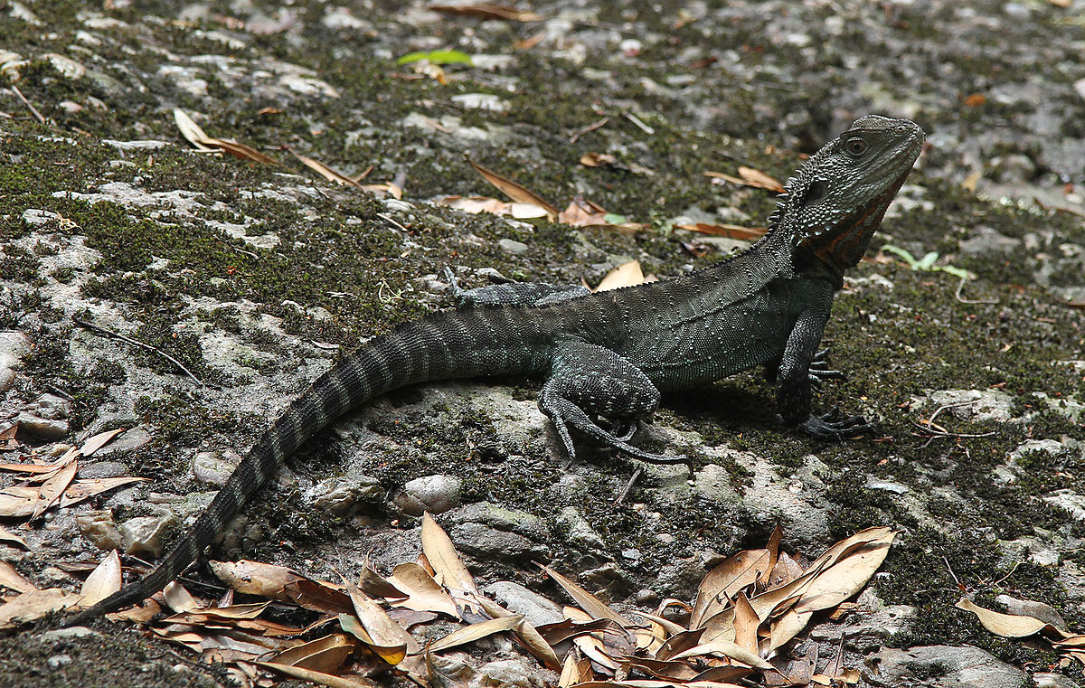 Image Result For Images Of Dragons